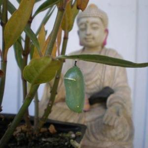 Buddha of the Chrysalis